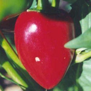 Australian Atomic Heart