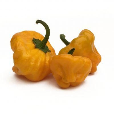 Jamaican Hot Yellow
