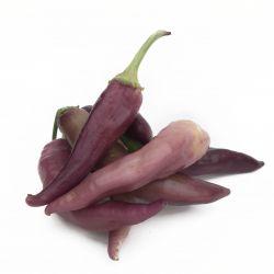 Cayenne Lilac